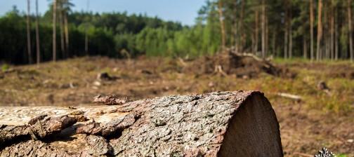 cati copaci sunt taiati anual in lume